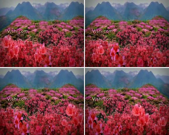 井冈山上的红太阳 革命