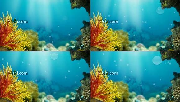 海底世界 珊瑚礁