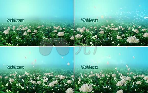新新茉莉花 民歌 中国 老歌 晚会演出背景视频