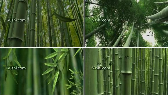 3D动画 竹韵 竹子 竹林