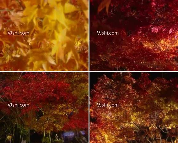 红叶夜 枫叶