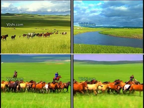 草原  马群