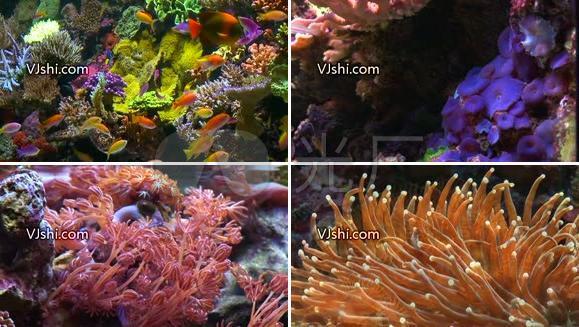 超美 海底世界