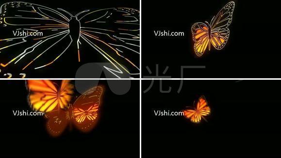 描边蝴蝶飞舞视频带通道
