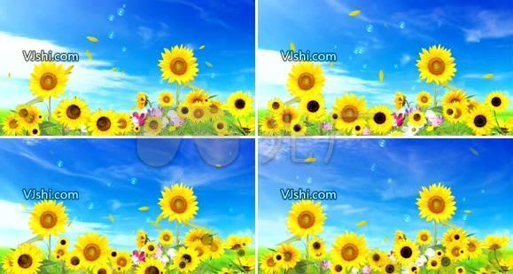旋转地向日葵