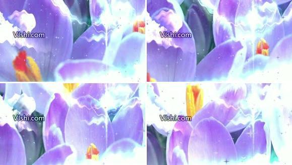 唯美花朵合成动态背景视频