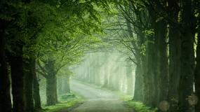 清晨森林薄雾视频素材