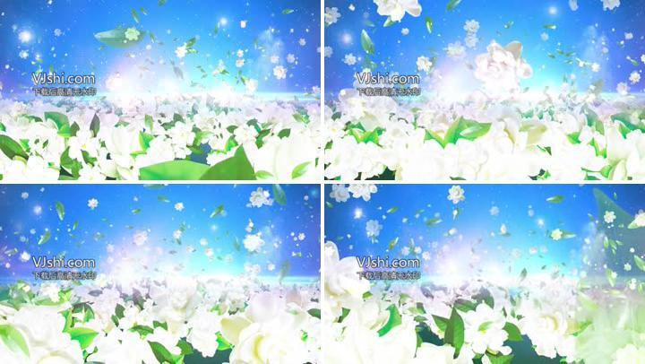 茉莉花绿叶飘宣传背景视频素材