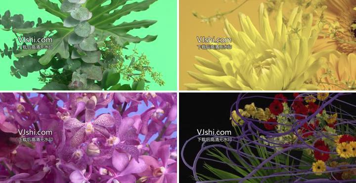 高清各种花各种特写实拍视频素材
