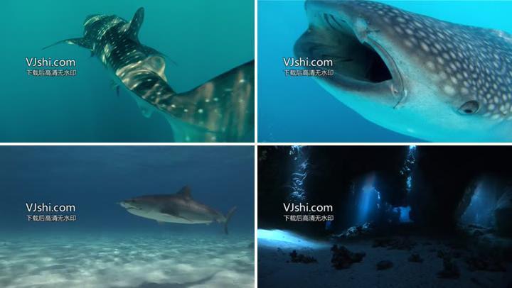 海底世界视频