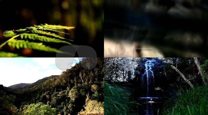 雨林,小溪,日落
