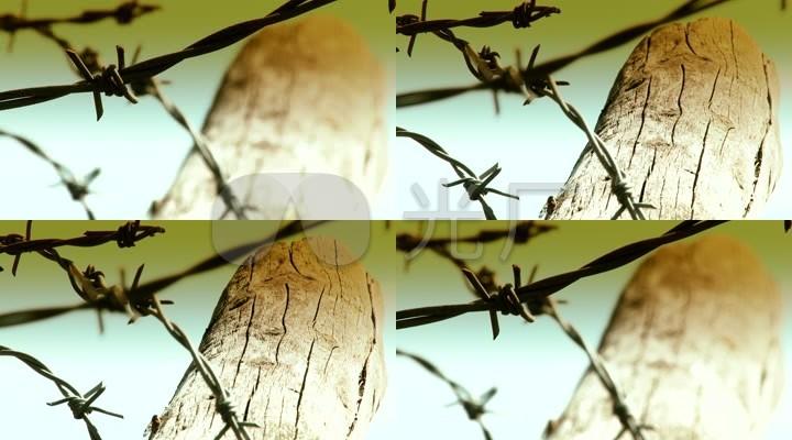 铁丝网栅栏牢笼