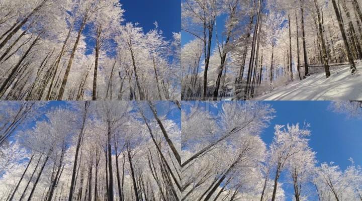 美丽的雪树和天空