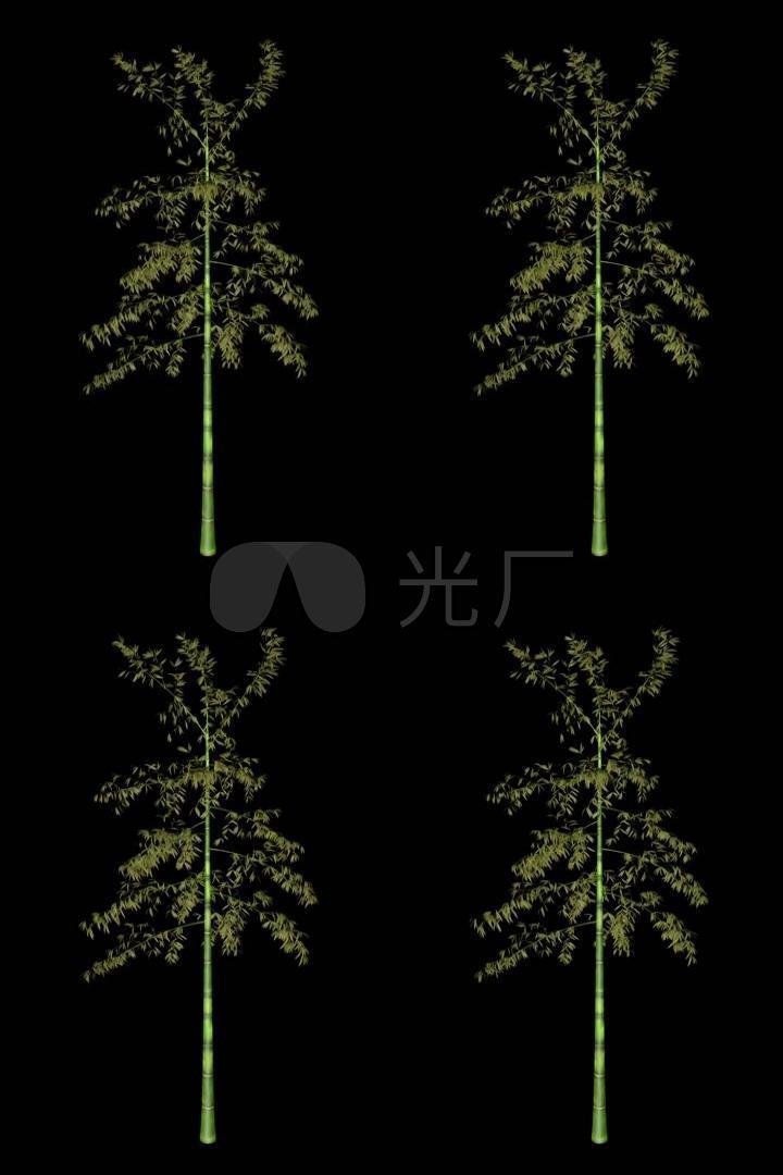 竹子带通道视频素材