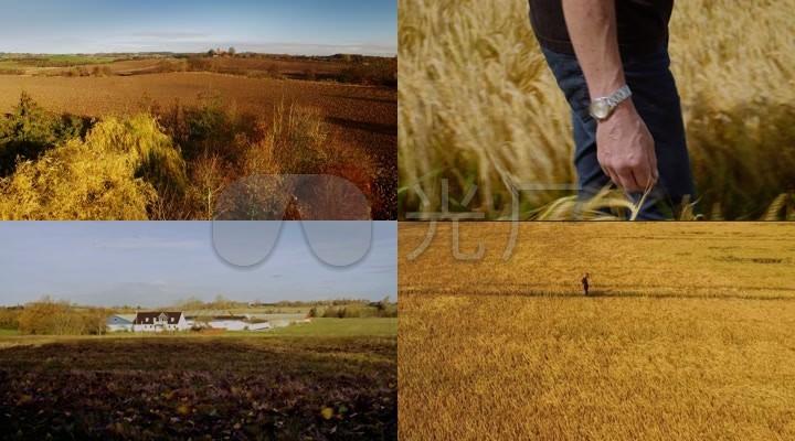 小麦与北欧农庄风光一组