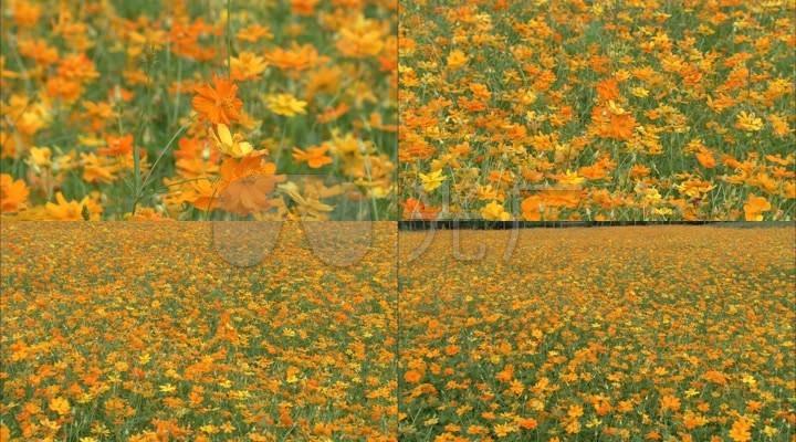 黄花绿叶野花遍地微风摇曳