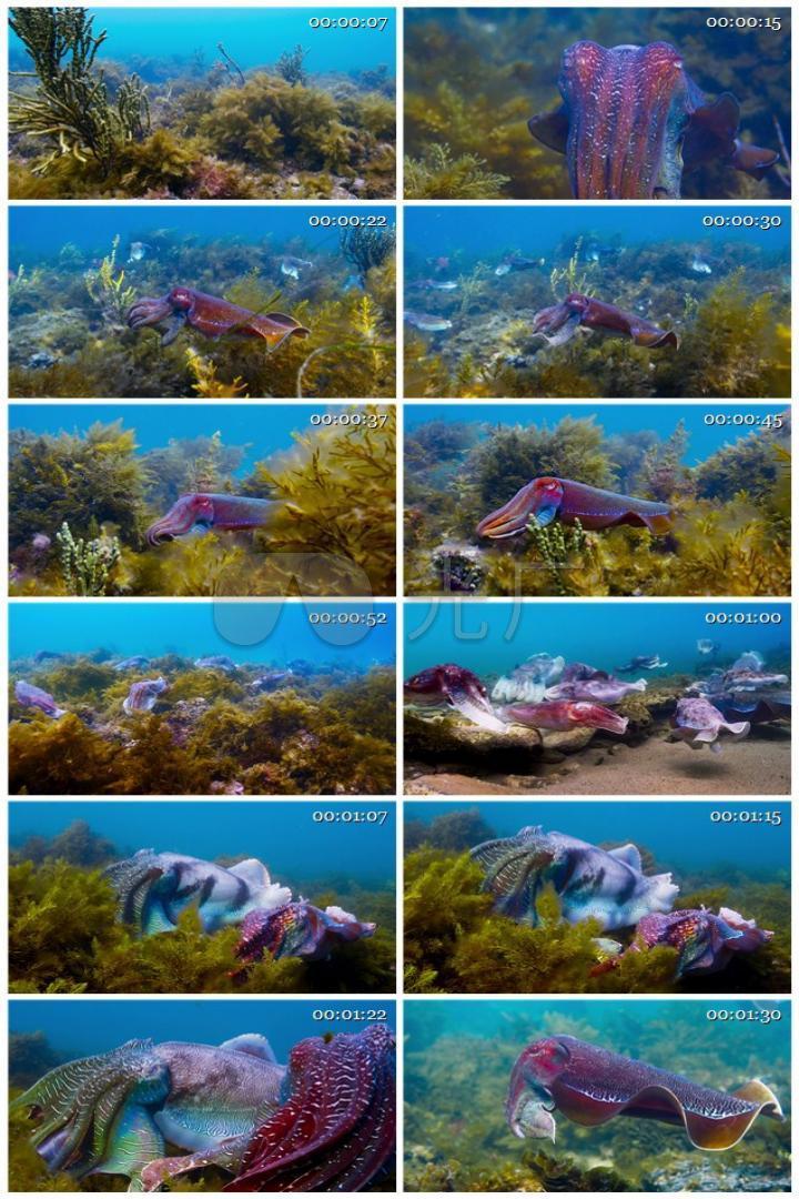 深海海洋生物章鱼
