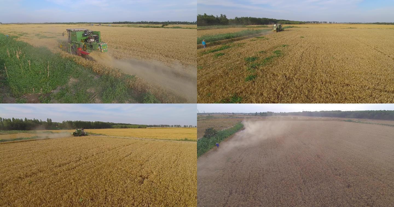【原创】粮田、麦地、割麦