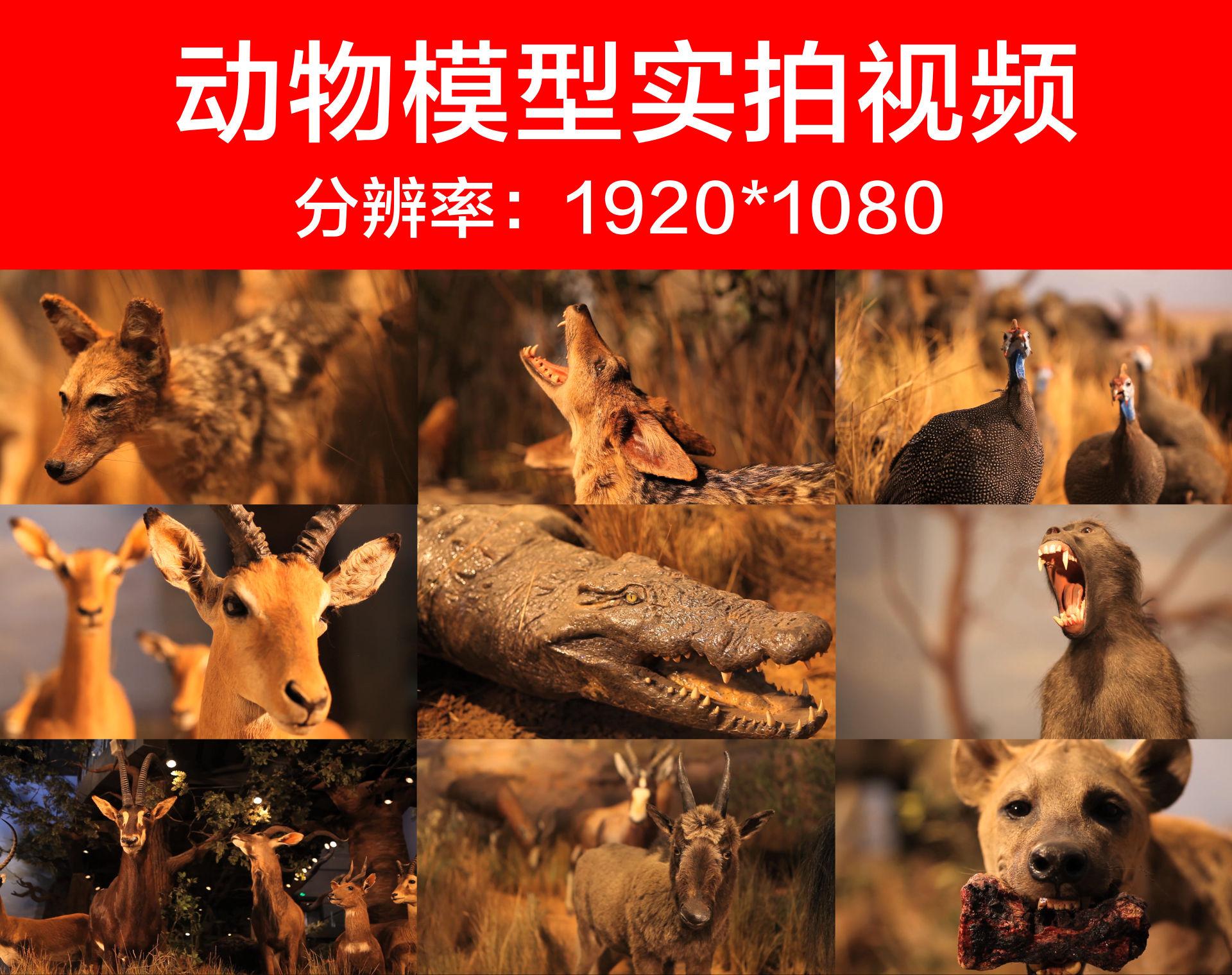 山东博物馆非洲野生动物