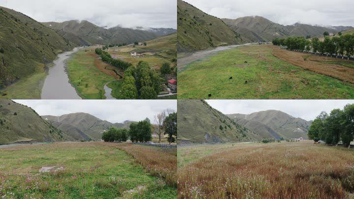 航拍秋天的新都桥的山谷公路与草原