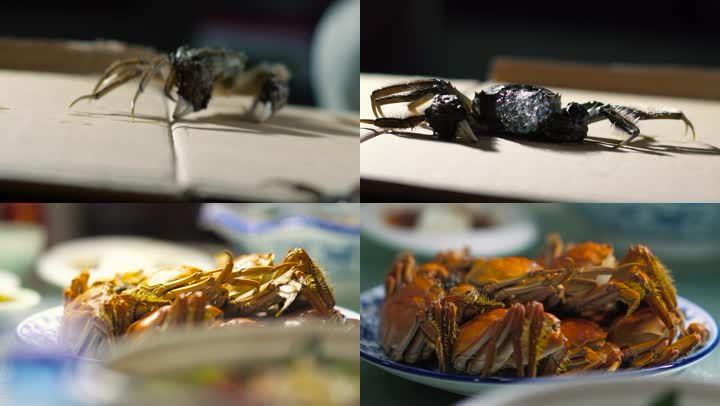 螃蟹蒸螃蟹太湖蟹螃蟹特写稻田蟹
