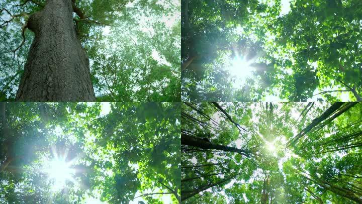 唯美自然绿色空气清新森林大树