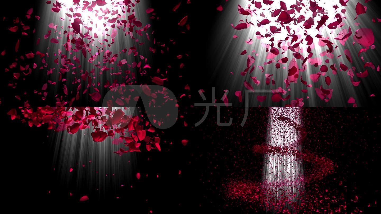 玫瑰花瓣玫瑰之舞上帝之光浪漫玫瑰花瓣唯美