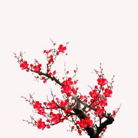 中国风红梅梅花腊梅带透明通道视频素材视频素材