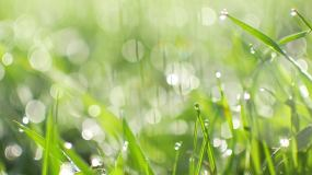 春天希望,小草青草,露水视频素材