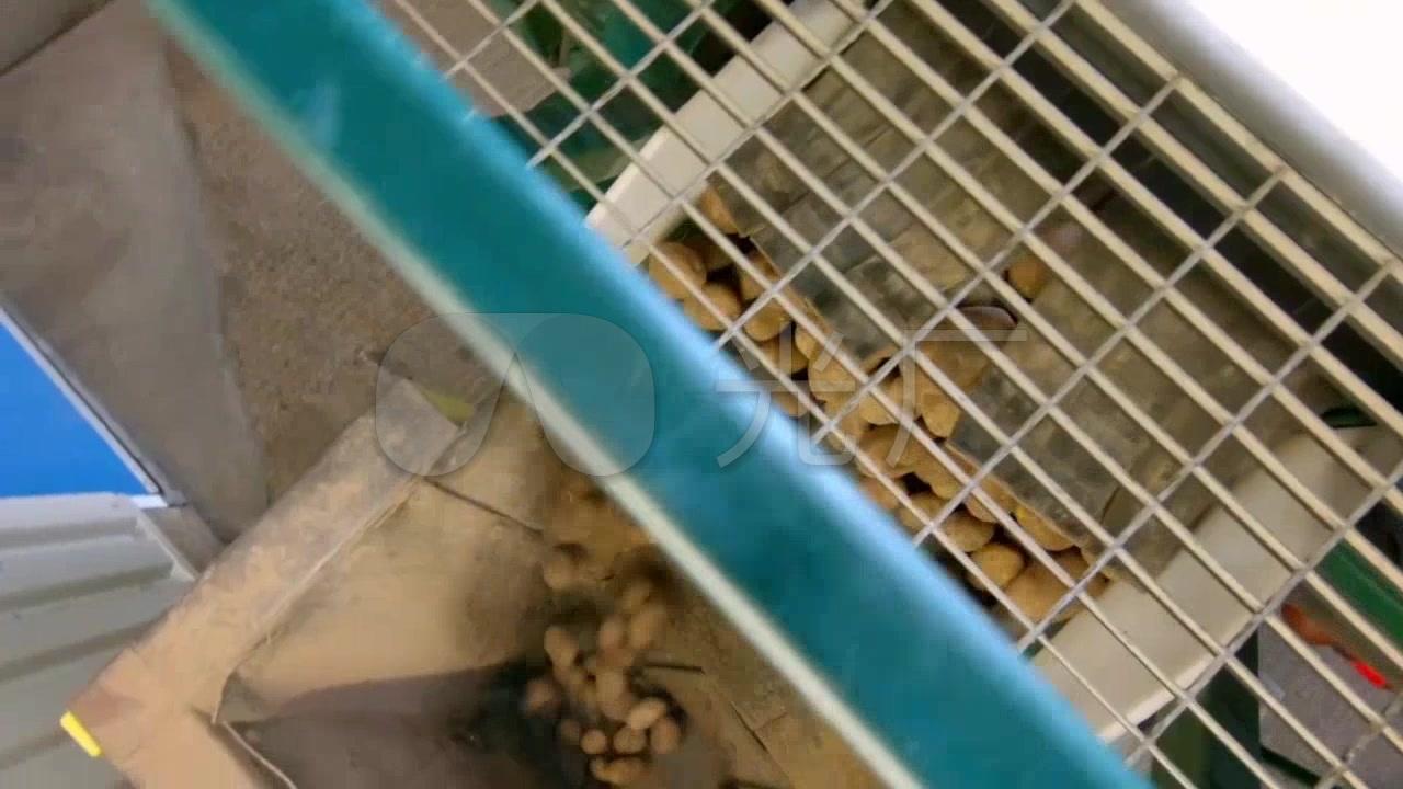 土豆食品工厂机械自动化传送带分拣筛选_128