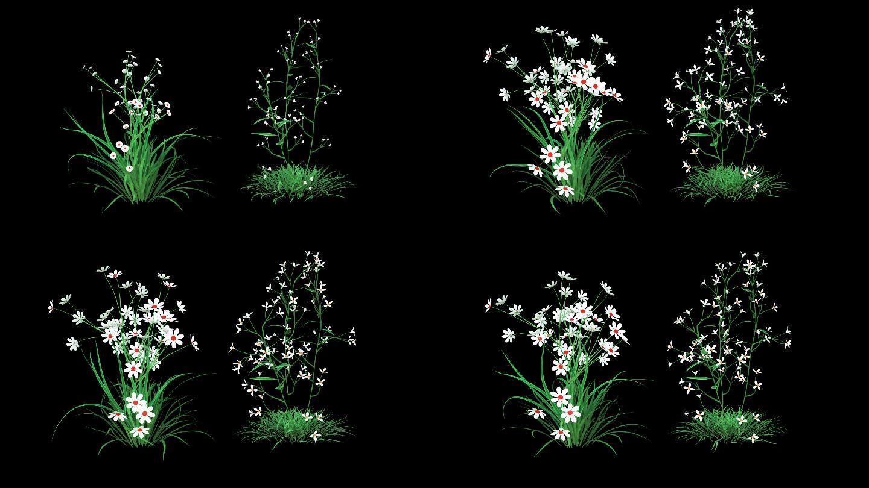 草原花生长