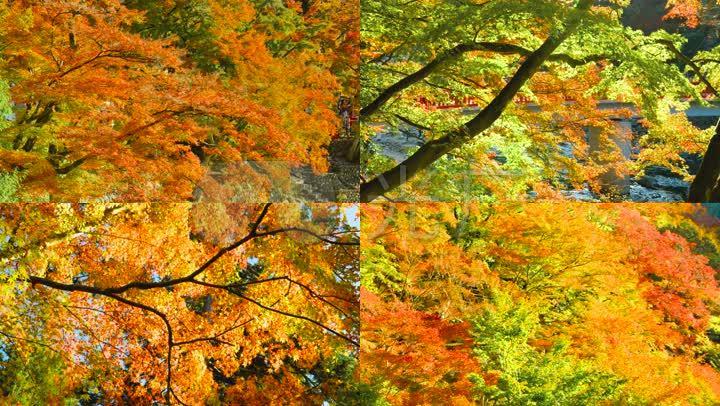 秋天红叶河流山林秋叶河水