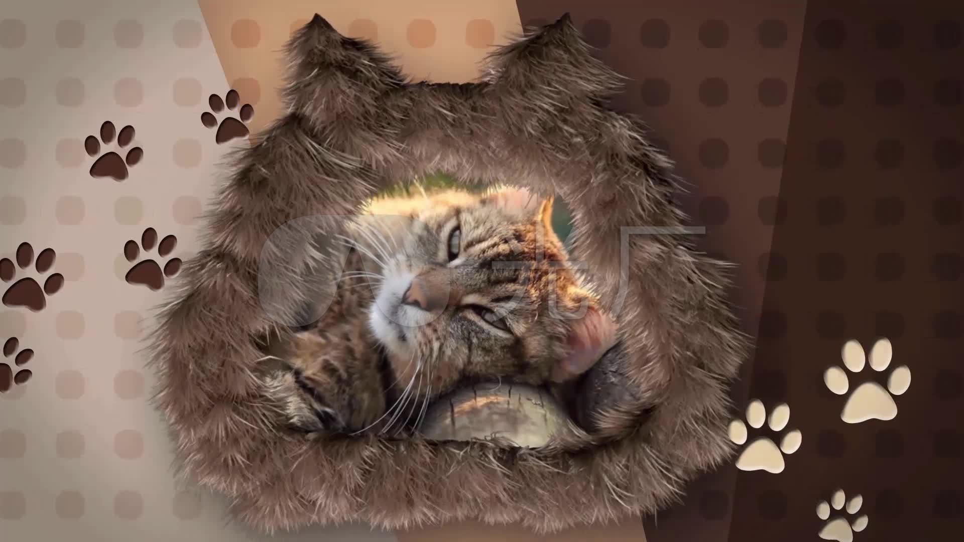可爱萌宠毛绒猫爪宠物小视频包装片头转场_1
