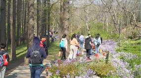 出游花海清明踏青公园游客春天花园赏花人群视频素材包