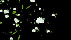茉莉花花朵绿叶青茶飘过横屏视频素材