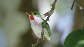 各种鸟儿站在枝头鸟儿飞走鸟儿梳洗羽毛森林视频素材