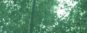 江西井冈山百竹园绝美竹林竹叶特写自然景观永利官网网址是多少