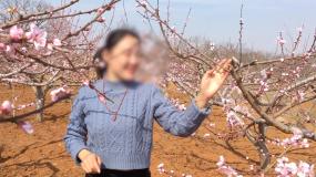初春花开春风桃花郊游踏青赏花视频素材包