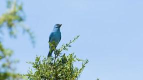 蓝色的小鸟视频素材