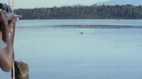非洲殖民3猎杀动物视频素材