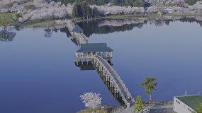 4k50樱花公园超级唯美静谧湖泊小桥流水视频素材