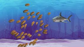 海底世界8k各种鱼群(02)视频素材包