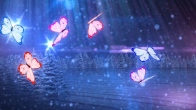 唯美夜空蝴蝶LED背景视频永利官网网址是多少