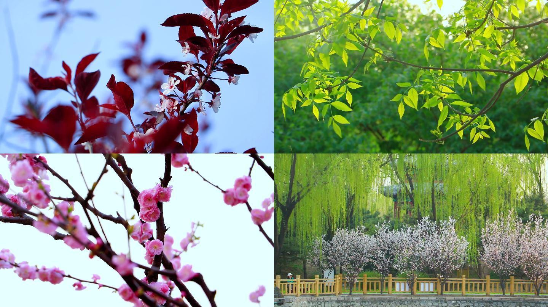 春天花卉鲜花绿叶