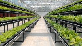 室内蔬菜种植视频素材
