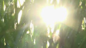 清晨阳光小草露水视频素材