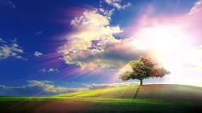 蓝天下的树永利官网网址是多少永利官网网址是多少