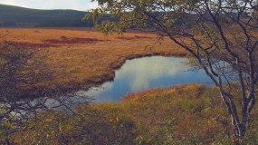 4k湿地生态公园清晨雾气大自然视频素材