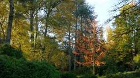 公园秋景视频素材
