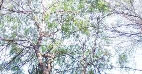 园林绿化视频素材